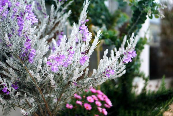 花壇~春のお花たち~
