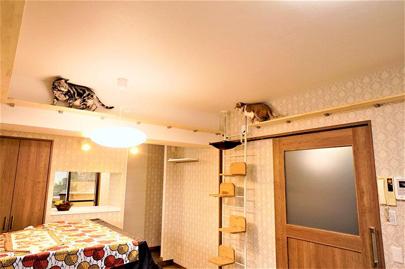 豊明市の施工事例 キッチンから見えるはこだわりのキャットウォークで遊ぶ愛猫